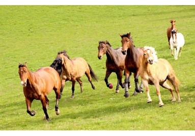 Diverses Pferdezubehör