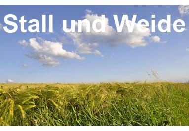 Stall und Weide